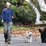 13. Dezember 2012: Portia de Rossi führt ihre beiden Hunde in einem Park in Beverly Hills aus.