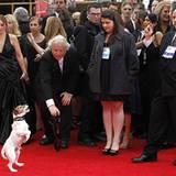 """Jack-Russell-Terrier Uggie zeigt auf dem roten Teppich, was er kann. Als tierischer Darsteller in """"The Artist"""" hatte er schon be"""