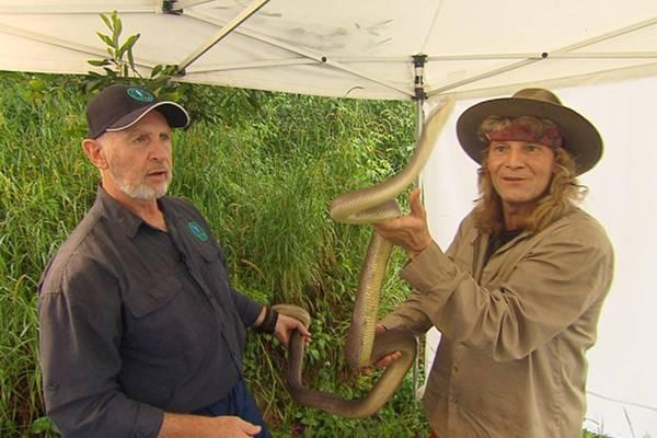 """Als nächster muss Vincent Raven das Camp verlassen. Zurück in """"Freiheit"""" nimmt es der Magier mit einer Schlange auf. Dr. Bob pas"""