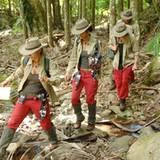 Auf geht's ins Dschungelcamp! Ein Teil der Bewohner wandert durch den australischen Dschungel, ...