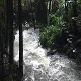 Wassermassen suchen ihren Weg durch den Urwald. Seit ein paar Tagen haben Regen und Überschwemmungen den australischen Dschungel