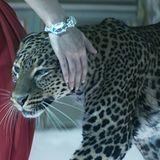 Erstmals in seiner Geschichte ließ Cartier jetzt einen Werbefilm drehen,  der im Kino und im Internet gezeigt wird. Mehr als zwei