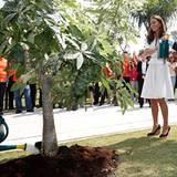 Zum Abschied pflanzt das Herzogspaar gemeinsam einen Baum.