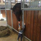 8. September 2016   Liebe auf den ersten Blick: Prinz Nicolas ist ganz vernarrt in dieses Pferd. Schon seine Schwester Leonore hat zur Taufe eine Pony geschenkt bekommen und auch seine Mutter Prinzessin Madeleine ist eine Pferdenarrin. Nun hat es wohl auch den kleinen Prinzen erwischt.