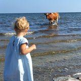 Beim Erkunden der Küste auf Öland trifft die süße Prinzessin Leonore von Schweden auf unerwartete Gesellschaft. Eine Seekuh hat sie sich wohl anders vorgestellt.