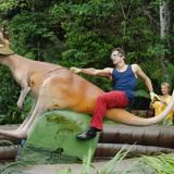 """In der Dschungelprüfung am elften Tag musssich Patrick Nuo auf dem Rücken eines Riesen-Wallaby halten und dabei Fragen beantworten. Alle Infos zu """"Ich bin ein Star - Holt mich hier raus!"""" im Special bei RTL.de: http://www.rtl.de/cms/sendungen/ich-bin-ein-star.html"""