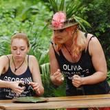 """Dschungelcamp 2013: Und da Olivia Jones genug Willenskraft für zwei hat, kann sie auch noch Georgina motivieren, sich unappetitliche Dinge einzuverleiben. Alle Infos zu """"Ich bin ein Star - Holt mich hier raus!"""" im Special bei RTL.de"""
