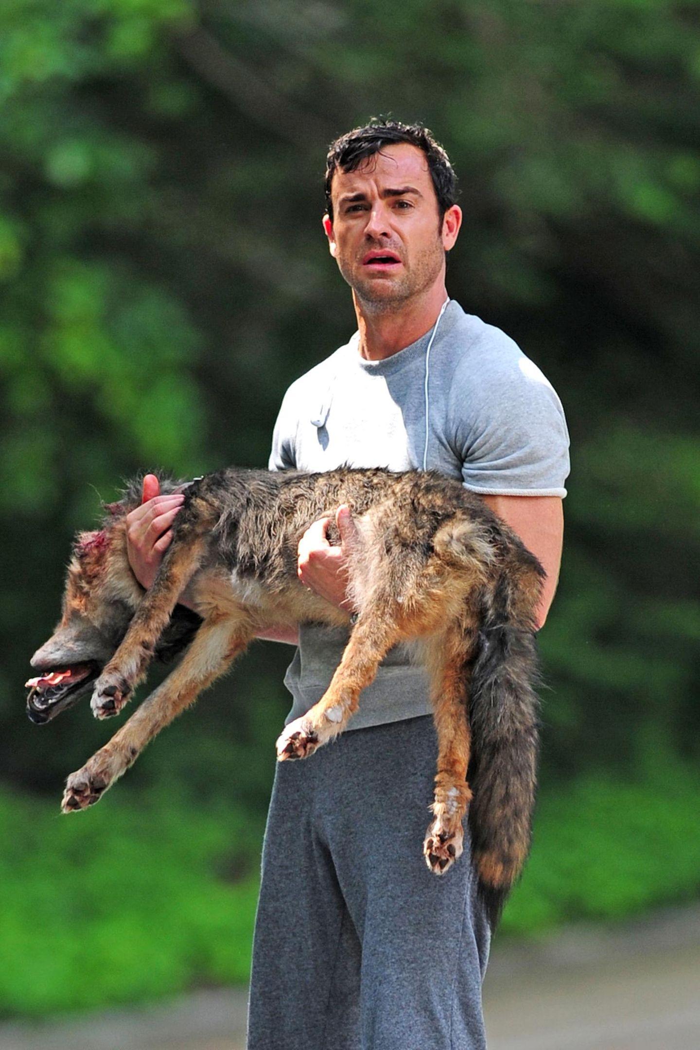 """26. Juni 2013: Justin Theroux trägt für """"The Leftovers"""" einen toten Hund."""