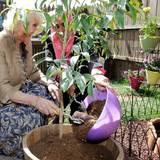 Beim späteren Besuch im Kindermuseum im Al-Hussein Park darf die Herzogin einen Baum pflanzen.