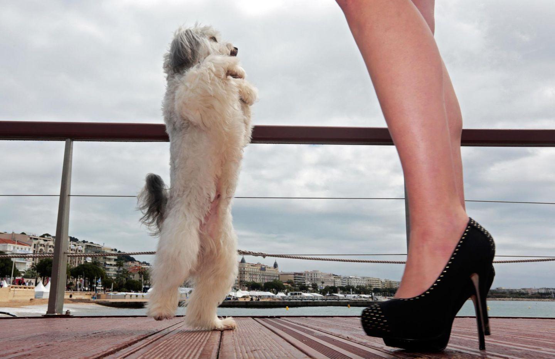 """Hund """"Pudsey"""" hat seinen eigenen Film und führt mit Hilfe von Trainerin Ashleigh Butler ein paar Kunststücke vor."""
