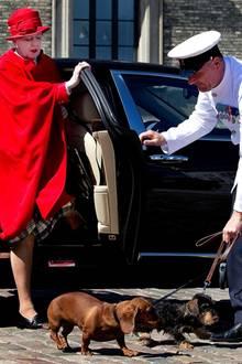 Querida und Helike, die Dackel des Königspaares, dürfen nicht fehlen, wenn die Dannebrog in See sticht. Und natürlich durften die Vierbeiner auch in der Limousine mitfahren und laufen als erstes über den roten Teppich, noch vor Königin Margrethe.