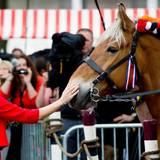 """Mitglieder von Zeelands Ringreiter Vereniging sind in Middelburg mit prachtvoll geschmückten Kaltblütern aufmarschiert. Beim Rundgang macht Königin Máxima bei den """"schweren Jungs"""" einen kurzen Halt."""