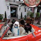 """Berühmte Hotelbesitzer: Im kalifornischen Carmel-by-the-Sea übernahm Schauspielerin Doris Day Mitte der 1980er Jahre mit ihrem Partner Dennis LeVett das Hotel """"Cypress Inn"""" . Die erfolgreiche Hollywood-Schauspielerin hat sich mittlerweile seit Jahrzehnten aus der Öffentlichkeit zurückgezogen und geht ihrer Passion nach: Sie kämpft für die Rechte von Tieren. Kein Wunder, dass ihr Hotel damit wirbt, das tierfreundlichste in der tierfreundlichsten Stadt Amerikas zu sein."""