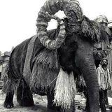 Die Banthas, Reittiere vom Planeten Tatooine, wurden von Elefanten dargestellt. Mit riesigen Hörnern und zotteligem Fell wurden sie zu furcheinflößenden Kreaturen.