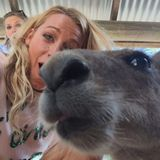 Nicht nur Menschen sind albern: Dieses süße Känguru photobombt das Selfie von Blake Lively, aber richtig!
