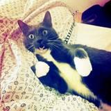 Diese Katze scheint etwas kamerascheu zu sein. Oder sie fürchtet sich vor Katzenmama Diane Kruger, die soben ein Raubtier in ihrem Bett entdeckt hat - wie sie auf Instagram schreibt.