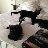 """Zuhause hat James Franco allerdings zwei deutlich schmalere Exemplare: Lux und Max. Ein Leben ohne seine vierbeinigen Freunde könnte er sich gar nicht vorstellen: """"Ich wurde als Katzenmensch erzogen, wir hatten daheim immer Katzen"""", erzählte er einmal in einem Interview mit """"teen.com""""."""