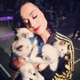 "Flauschalarm! Zu diesem Foto schreibt Katy Perry ""Heaven is a Place on Earth""."