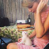 """Auf Instagram stellt Taylor Swift ihren Fans ihr neues Familienmitglied """"Olivia Benson"""" vor."""