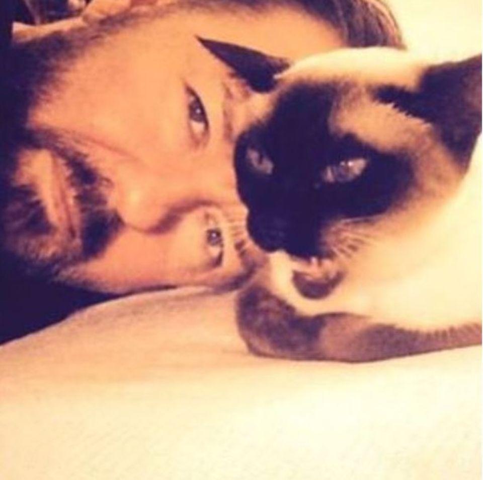 Ricky Gervais ist mächtig verliebt in seine Katze. Ihm gefällt dieses Bild so sehr, dass er dafür glatt sein altes Instagram-Profilbild austauscht.