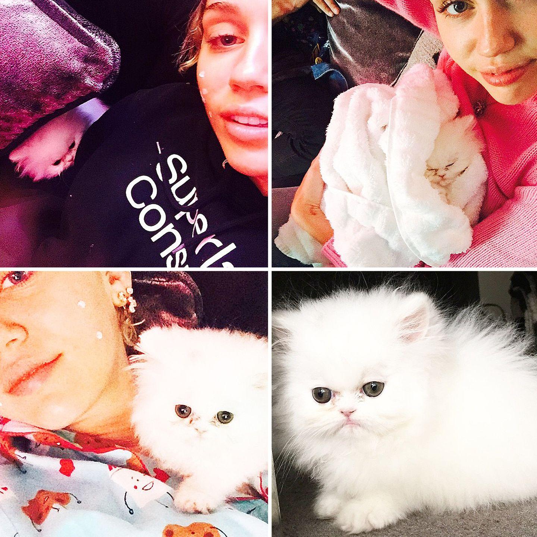 Stars und ihre Katzen: Miley Cyrus stellt ihr neuestes Familienmitglied vor. Das Kätzchen mit dem ungewöhnlichen Namen Shanti Om Bb hat natürlich auch einen eigenen Instagram-Account .