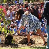 Cricket-Spielen, Händeschütteln und auch Bäumepflanzen - alles erledigt Herzogin Catherine elegant und in hohen Schuhen.