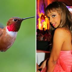"""Kolibri  Für Bahati Venus ist denkt sich der Baulöwe den tierischen Spitznamen """"Kolibri"""" aus. Sie flattert ihm nach knapp fünf Monaten davon."""
