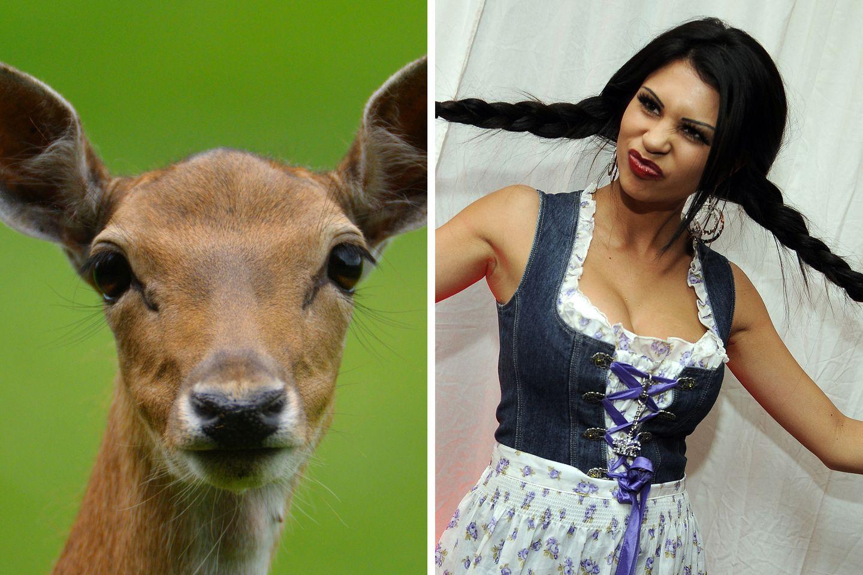 Lugner Bambi