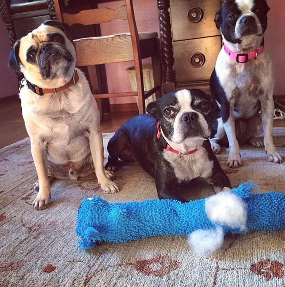 Robin Williams ist ein wahrer Tierfreund und umgibt sich neben Leonard auch gern mit anderen Hunden.