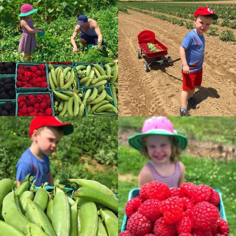 Neil Patrick Harris ist mit den Kindern auf einer Farm wo sie Zuckererbsen und Himbeeren sammeln. Während sich Harper nur schnell satt essen möchte, will Gideon den ganzen Tag bleiben.