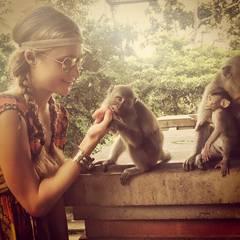 Dieser Affe hat Paris Ring zum Fressen gern.