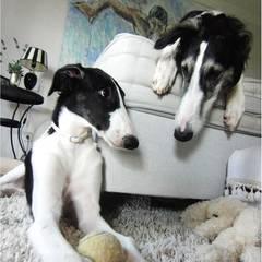 Seine Windhunde liebt Guido Maria Kretschmer über alles.