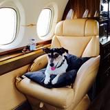 Ganz schön verwöhnt, die kleine Audrey. Der Jack-Russell-Terrier macht es sich auf einem Sitz im luxuriösen Privatjet bequem.