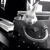 Schau an, was eine It-Bag so alles kann! Kaninchen Cecil findet es scheinbar ganz schön gemütlich im bestickten Modell von Mulberry.