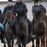 Was ein echter royaler Reiter ist, der nutzt jedes Angebot für einen kleinen Ausritt. Beim offiziellen Besuch auf Island 2008 reitet Kronprinz Frederik gemeinsam mit Ehefrau Mary (nicht im Bild) eine Runde auf einem waschechten Islandpferd.