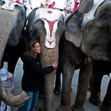 Prinzessin Stéphanie ist fasziniert von besonders großen Tieren - und setzt sich für sie ein. Einer ihrer Ex-Freunde war Elefanten-Trainer im Zirkus, daher dürfte die Vorliebe für die Dickhäuter stammen.