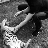 """... verraten, dass sich Kaley einen ganz schön """"wilden"""" Ort für ihren Geburtstag ausgesucht hat. Gemeinsam mit einem kleinen Tiger startet sie am Montag mit einem lauten """"Roar"""" und einer Kuscheleinheit in ihren Ehrentag."""