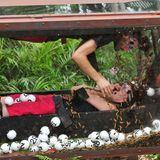 Gemeinsam sind sie in einer Box, die sich zusammen mit 49 Lottokugeln und diversen Dschungelbewohnern dreht.