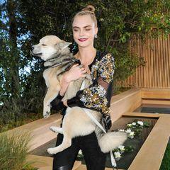 Wer seinen Hund liebt, der trägt... Cara Delevingne hat ihren süßen, müden Vierbeiner mit zur Chanel-Show gebracht.