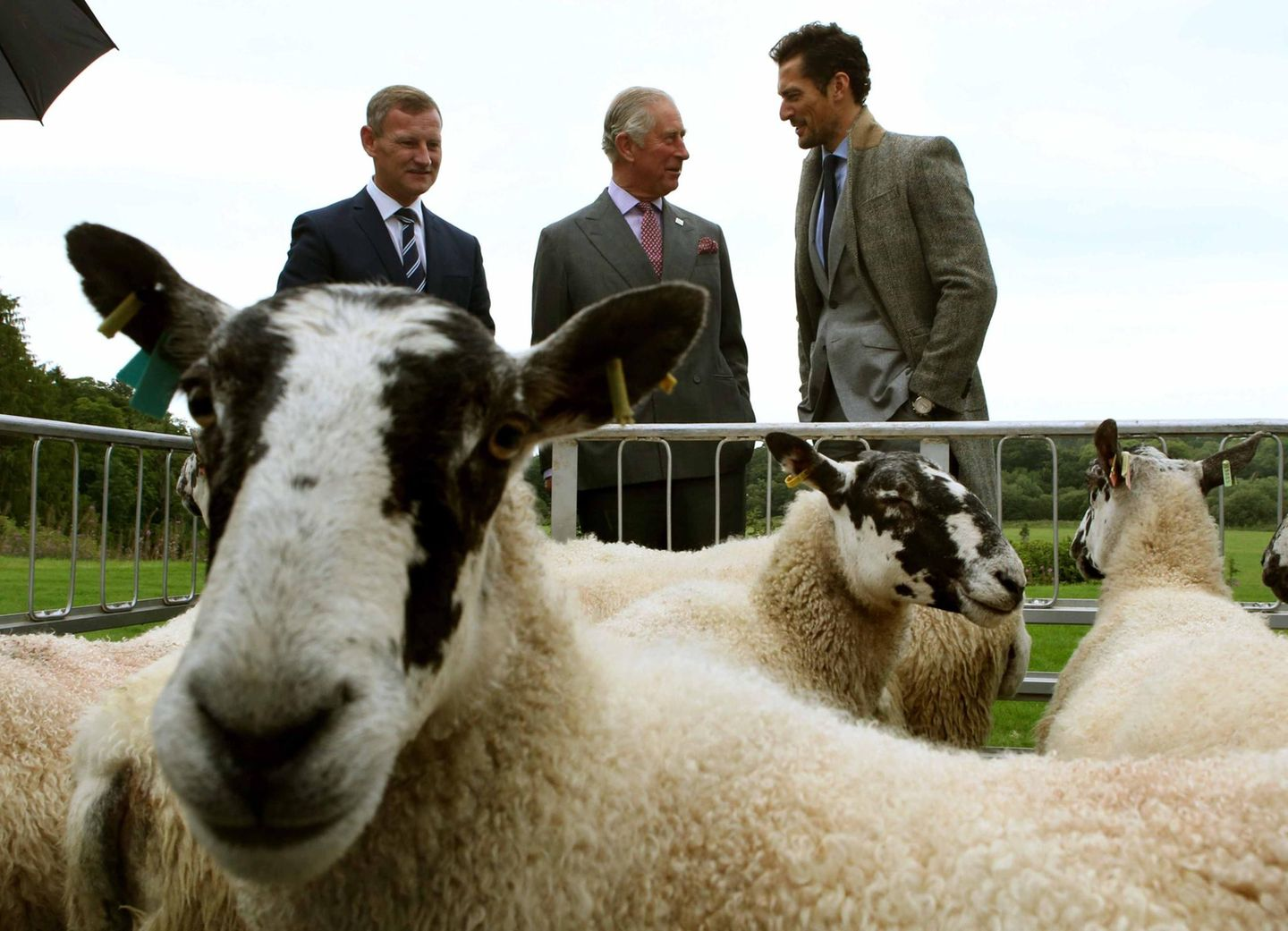 "9. September 2016: Engalnds Thronfolger nimmt an der ""Dumfries House Wool Conference"" teil, wo es sich um Wolle dreht. Und die Lieferanten vor Ort, wollige Schafe, schaut er sich persönlich an."