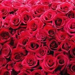 Sabia Boulahrouz freut sich über den Anblick dieser vielen Rosen.