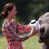 Tag 4  Dieser kleine Elefant lässt sich bereitwillig von dem royalen Besuch mit der Flasche füttern.