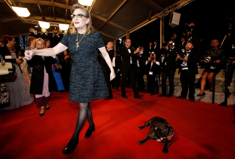 """Carrie Fisher bringt ihren Mops mit zur Vorstellung von """"The Handmaiden""""."""