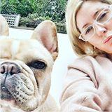Star, die fränzösische Bulldogge, gehört zur Kronprinzenfamilie und wird bei Instagram natürlich in allen Lebenslagen in Szene gesetzt.