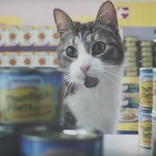 Die lustigen Katzen sind ein echter Viral-Hit geworden.