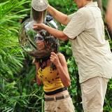 Kader Loth wird ein Helm mit 6000 Kakerlaken übergestülpt.