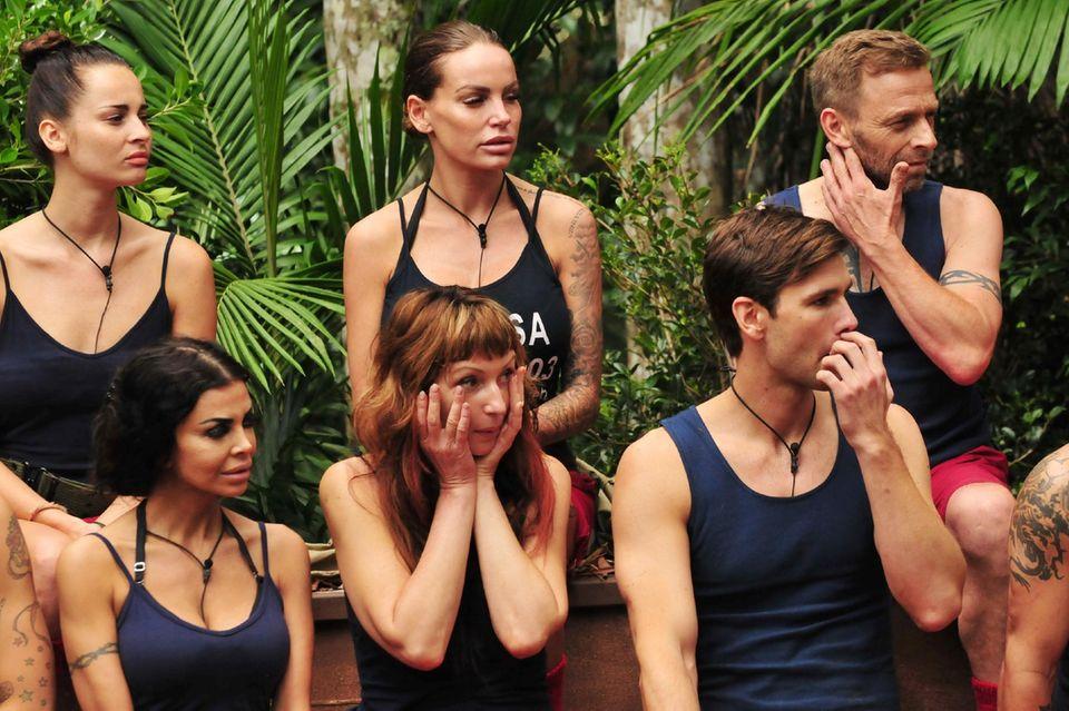 Die Dschungelcamper sind schockiert