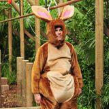 Tag 11   Honey muss in einem Känguru-Kostüm einen fünfteiligen Parcours bewältigen. Auf dem Kopf des Kostüms befinden sich zwei Drähte, zwischen denen er während des Parcours einen heißen Draht führen muss.