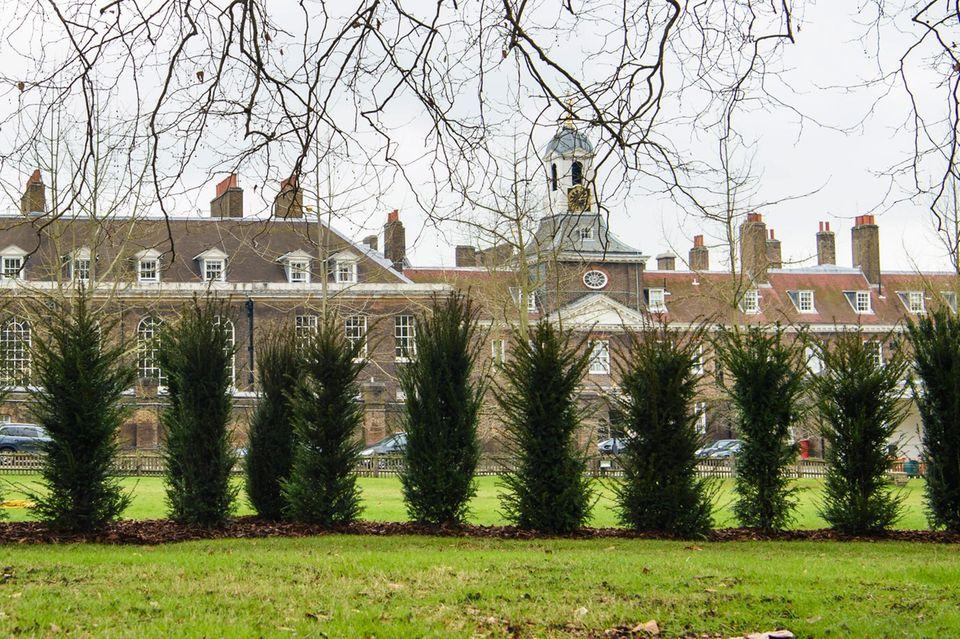Diese Baumhecke vor dem Westflügel des Kensington Palastes soll die royale Familie vor neugierigen Blicken schützen