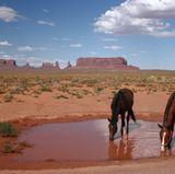"""Arizona  2016 durfte Leonard Freier """"seine"""" Leonie-Rosella nach Arizona entführen. Hier wurde ein wahrer Mädchentraum wahr: Romantisch ritten die zwei auf Pferden durch die Weiten der Wüste.  Der Insidertipp von """"Travelcircus"""" für alle Abenteurer, die es etwas schärfer und kulinarisch mögen: der Salsa-Trail, die feurigste Reiseroute durch den Bundesstaat mit Stopps an einer Chili-Farm oder einer Tortilla-Fabrik"""